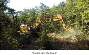 How to Build a Forest in your Backyard - The Miyawaki Method