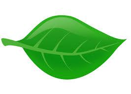 Minutes of Leaf